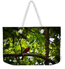 Cardinal In The Trees Weekender Tote Bag