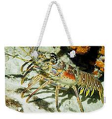 Caribbean Spiny Reef Lobster  Weekender Tote Bag by Amy McDaniel