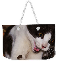 Weekender Tote Bag featuring the photograph Chasing Tails  by Naomi Burgess