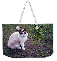 Weekender Tote Bag featuring the photograph Cat 'n Orange Tree by Joseph Baril