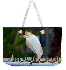 Weekender Tote Bag featuring the photograph Cattle Egret Breeding Plumage by Debra Martz