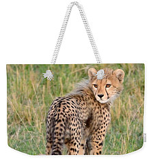 Weekender Tote Bag featuring the photograph Cheetah Cub Looking Your Way by Tom Wurl