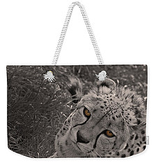 Cheetah Eyes Weekender Tote Bag by Martin Newman