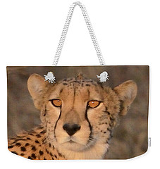 Weekender Tote Bag featuring the photograph Cheetah Gaze At Sunset by Tom Wurl
