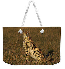Cheetah On Savanna Masai Mara Kenya Weekender Tote Bag by Hiroya Minakuchi