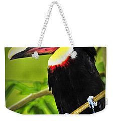 Chestnut Mandibled Toucan Weekender Tote Bag