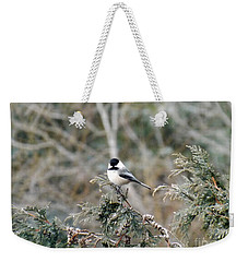 Weekender Tote Bag featuring the photograph Chickadee In Cedar by Brenda Brown