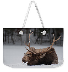 Weekender Tote Bag featuring the photograph Chillin' by Bianca Nadeau