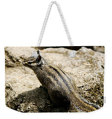 Weekender Tote Bag featuring the photograph Chipmunk On A Rock by Belinda Greb