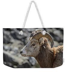 Close Big Horn Sheep  Weekender Tote Bag