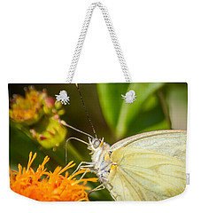 Weekender Tote Bag featuring the photograph Butterfly Attracted To Mexican Flame by Debra Martz