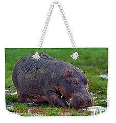 Close-up Of A Hippopotamus, Lake Weekender Tote Bag by Panoramic Images
