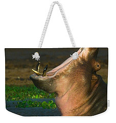 Close-up Of A Hippopotamus Yawning Weekender Tote Bag by Panoramic Images