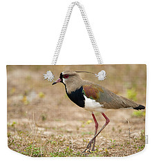 Close-up Of A Southern Lapwing Vanellus Weekender Tote Bag