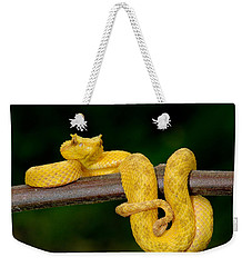Close-up Of An Eyelash Viper Weekender Tote Bag by Panoramic Images