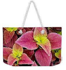 Coleus Colorfulius Weekender Tote Bag by David Lawson
