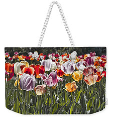 Colorful Tulips In The Sun Weekender Tote Bag