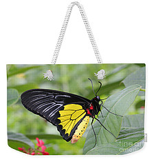 Weekender Tote Bag featuring the photograph Common Birdwing Butterfly by Judy Whitton