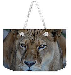 Concerned Lioness Weekender Tote Bag