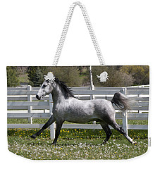 Weekender Tote Bag featuring the photograph Conversano Catalina IIi D4000 by Wes and Dotty Weber