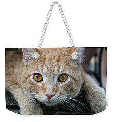 Cool Cat Named Calvin Weekender Tote Bag