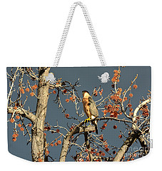 Cooper's Hawk Catches Sun In Stormy Sky Weekender Tote Bag
