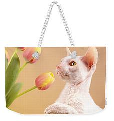 Cornish Rex Cat Weekender Tote Bag by Verena Matthew