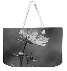 Weekender Tote Bag featuring the photograph Cosmo Flower Reaching For The Sun by Debbie Green