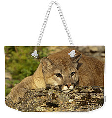 Cougar On Lichen Rock Weekender Tote Bag