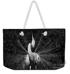 Weekender Tote Bag featuring the photograph Great Egret Courtship Plumes  by John F Tsumas