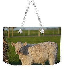 Weekender Tote Bag featuring the photograph Cow 1 by Naomi Burgess