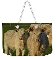 Weekender Tote Bag featuring the photograph Cow 2 by Naomi Burgess