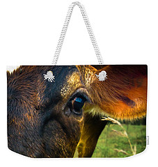 Cow Eating Grass Weekender Tote Bag by Bob Orsillo