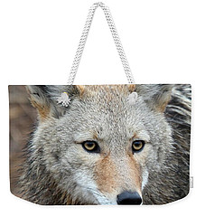 Weekender Tote Bag featuring the photograph Coyote by Athena Mckinzie