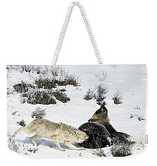 Coyote Biting A Grizzly Weekender Tote Bag