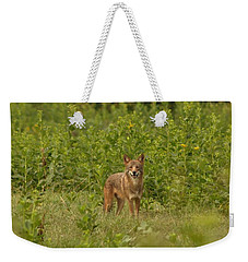 Coyote Happy Weekender Tote Bag
