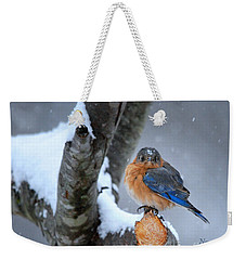 Weekender Tote Bag featuring the photograph Cranky Can Be Cute by Nava Thompson