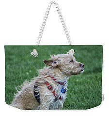 Weekender Tote Bag featuring the photograph Cruz Enjoying A Warm Gentle Breeze by Thomas Woolworth