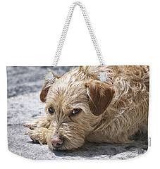 Weekender Tote Bag featuring the photograph Cruz You Looking At Me by Thomas Woolworth
