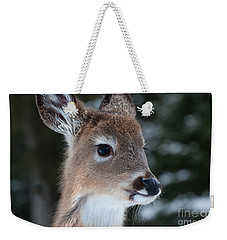 Weekender Tote Bag featuring the photograph Curious Fawn by Bianca Nadeau