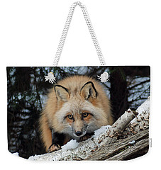 Curious Fox Weekender Tote Bag