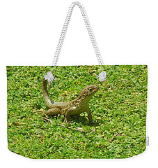 Curly-tailed Lizard Weekender Tote Bag