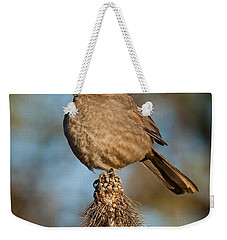 Curve-billed Thrasher On A Cactus Weekender Tote Bag