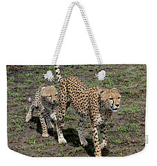 Weekender Tote Bag featuring the photograph Cute Cheetah Wait For Me Mommy by Tom Wurl