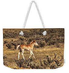 Cute Colt Wild Horse On Navajo Indian Reservation  Weekender Tote Bag by Jerry Cowart