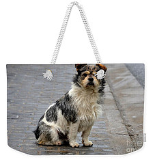 Cute Dog Sits On Pavement And Stares At Camera Weekender Tote Bag