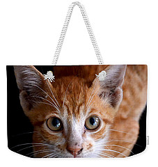Cute Kitten Weekender Tote Bag