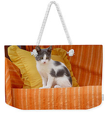 Weekender Tote Bag featuring the photograph Cute Kitty by Vicki Spindler