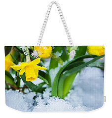 Daffodils In The Snow  Weekender Tote Bag