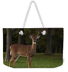 Weekender Tote Bag featuring the photograph Deer In Headlight Look by Tammy Espino